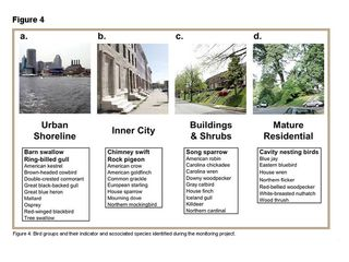 Urban bird habitat types