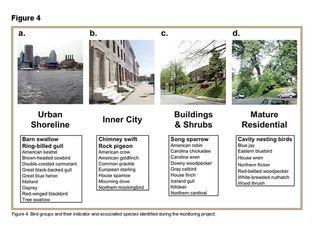 Urban bird habitat types