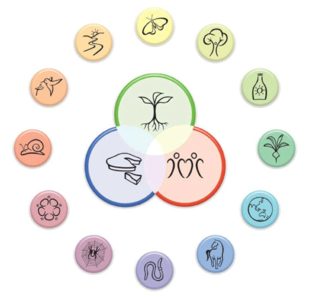 12 permaculture principlies